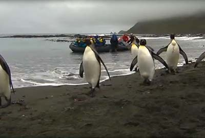 Macquarie Island Wildlife Paradise, Dante Rainforest, Jawoyn Sacred Sites